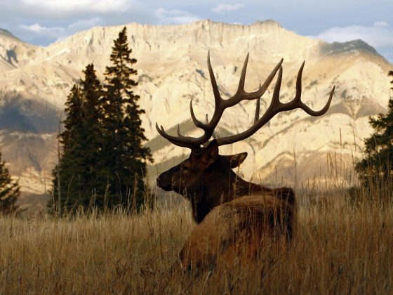 elk hunting guides